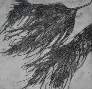 Jacky Lowry collagraph print of real sheoak plant. Art. Printmaking.