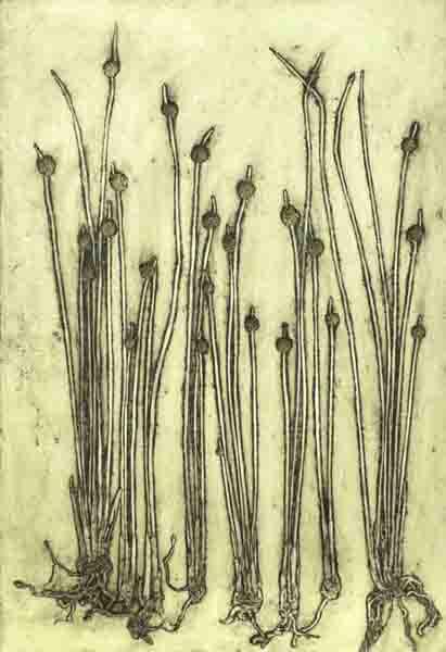 Banner image: Ficinia nodosa