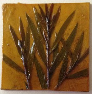 Jacky Lowry artist and printmaker, tiny printing plate of fresh bottlebrush plant growth.