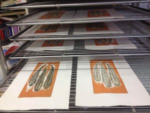 Banksia serrata 3 prints in drying rack.
