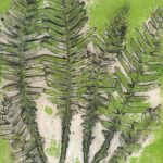Conondale Fishbone Fern EV1-6 ©Jacky Lowry 2020 Collagraph Print with Relief Roll
