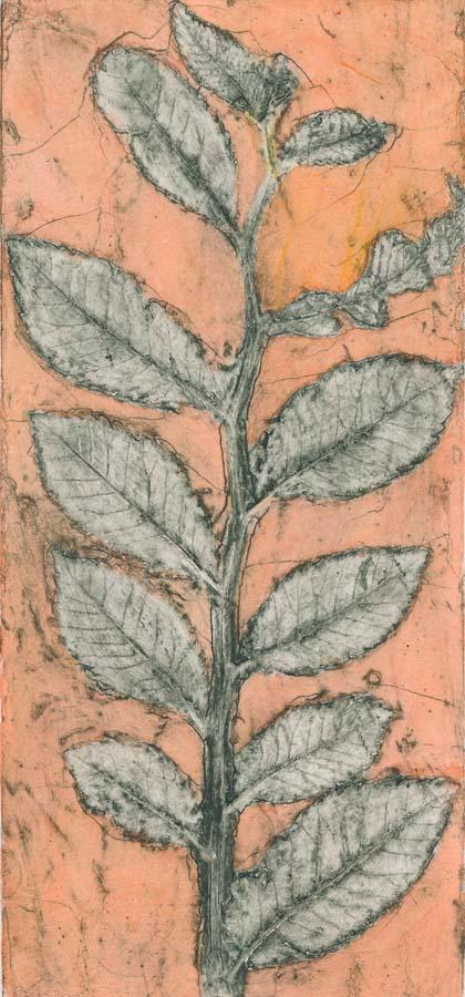 Cotoneaster 2 EV1/6